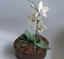 торт в виде горшка с орхидеей