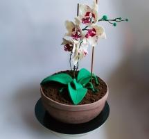 Торт в виде орхидеи
