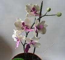 торт орхидея в горшке